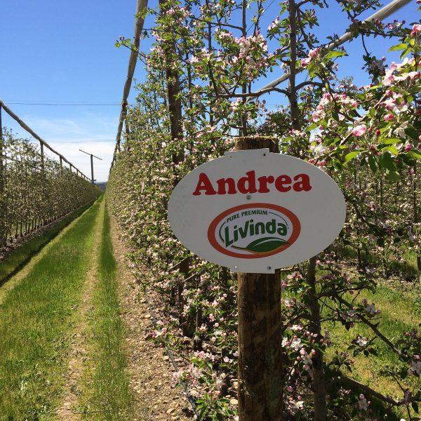 manzanas livinda calle con mi nombre ANDREA
